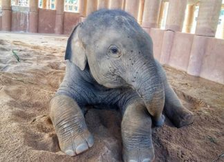 Dok-Geaw-Elephant-Nature-Park-v1